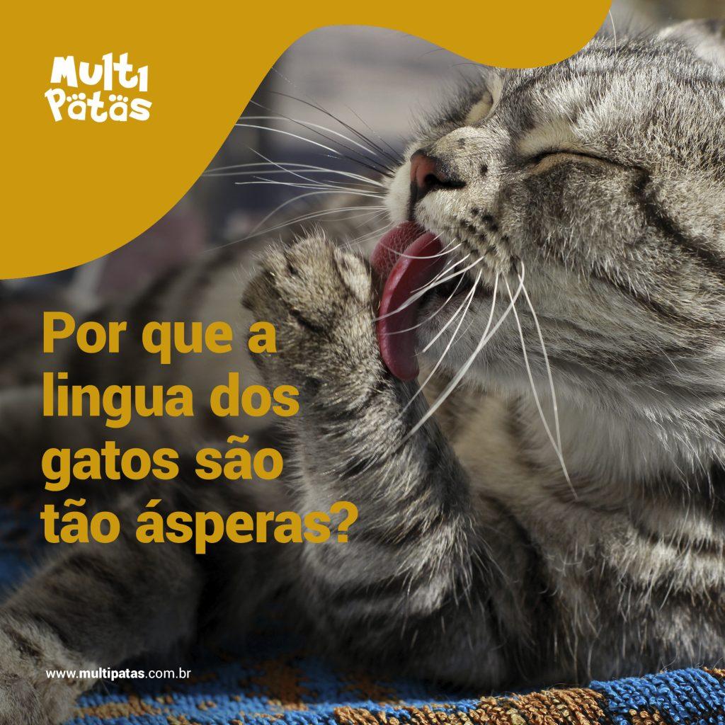 Por que a lingua dos gatos são ásperas