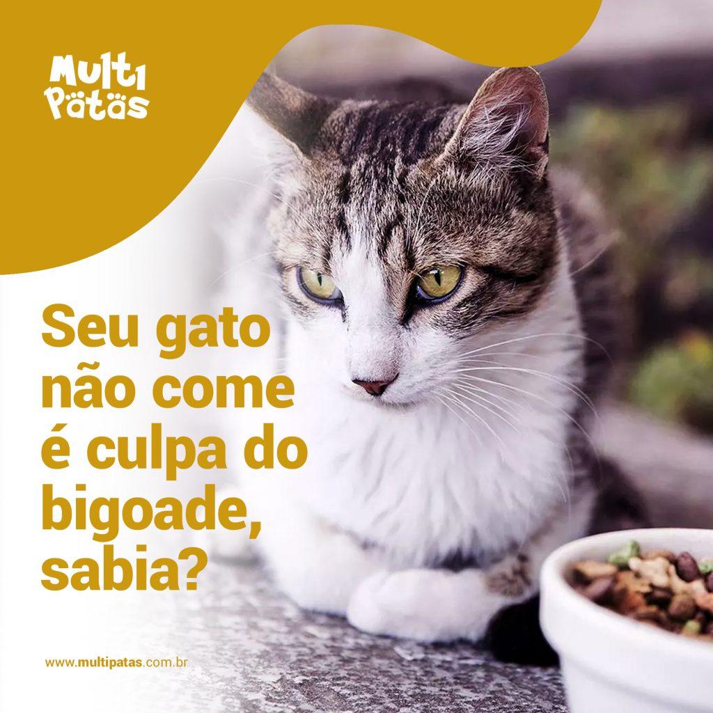 Bigode dos Gatos