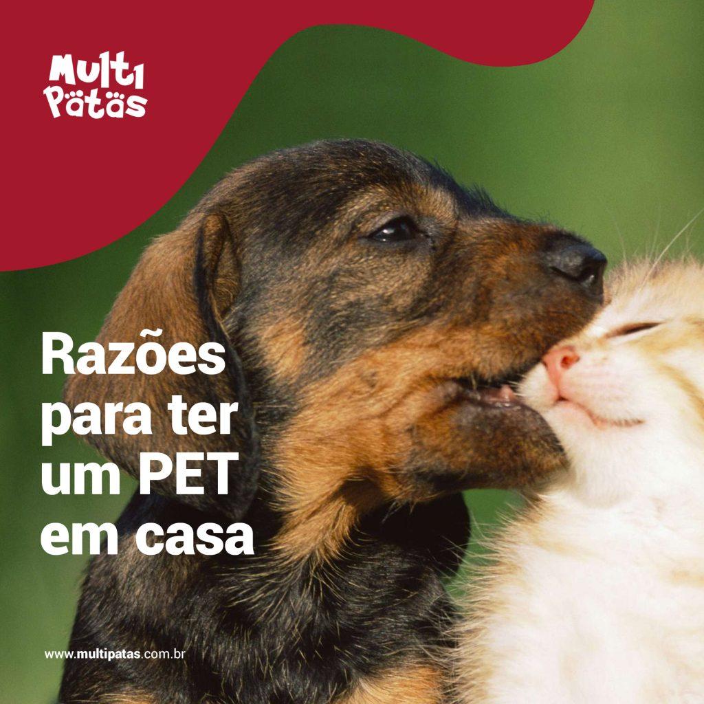 Razões para ter um PET em casa